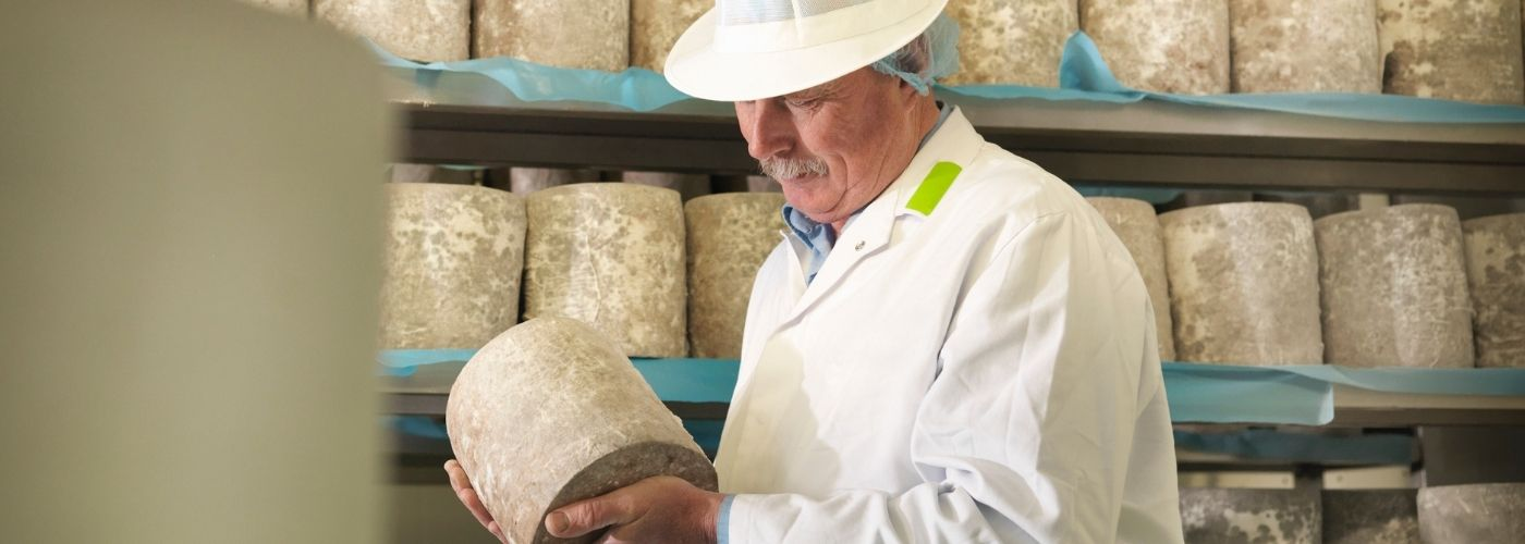 Cheese manufacturer holding cheese in factory